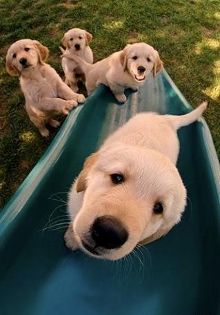 puppies_kieleke 3