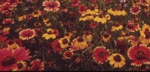 Rauhaa ja rakkautta – päivä hippinä